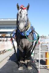 190102 ばん馬とのふれあい-01