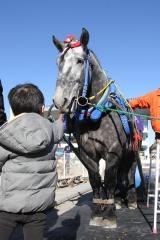 190102 ばん馬とのふれあい-03