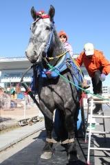 190102 ばん馬とのふれあい-04