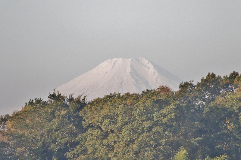 ①富士山488A8063 (2)_S
