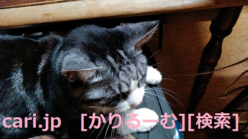 moblog_0bd9d146.jpg