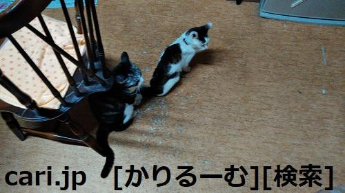 moblog_4b32e328.jpg