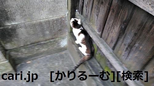 moblog_519c82ef.jpg