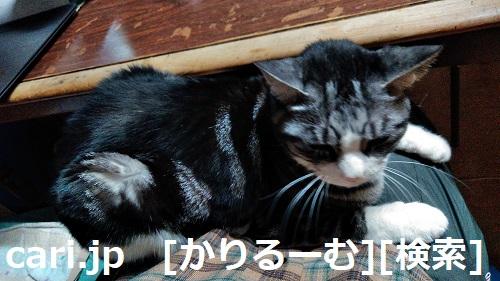 moblog_d703f42b.jpg