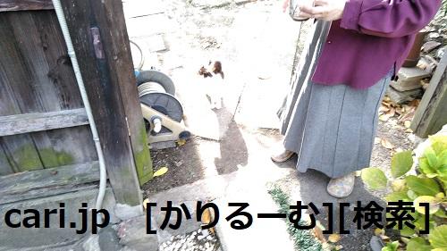 moblog_e66b6abc.jpg