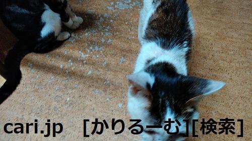 moblog_f0e70185.jpg