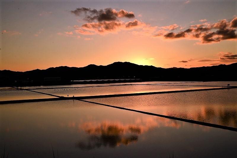 夕陽の白鳥4