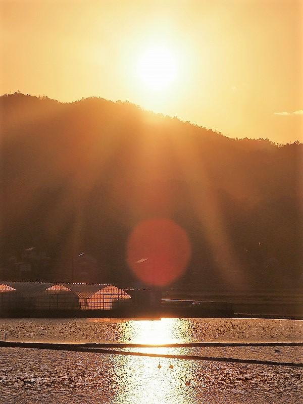 夕陽の白鳥1t
