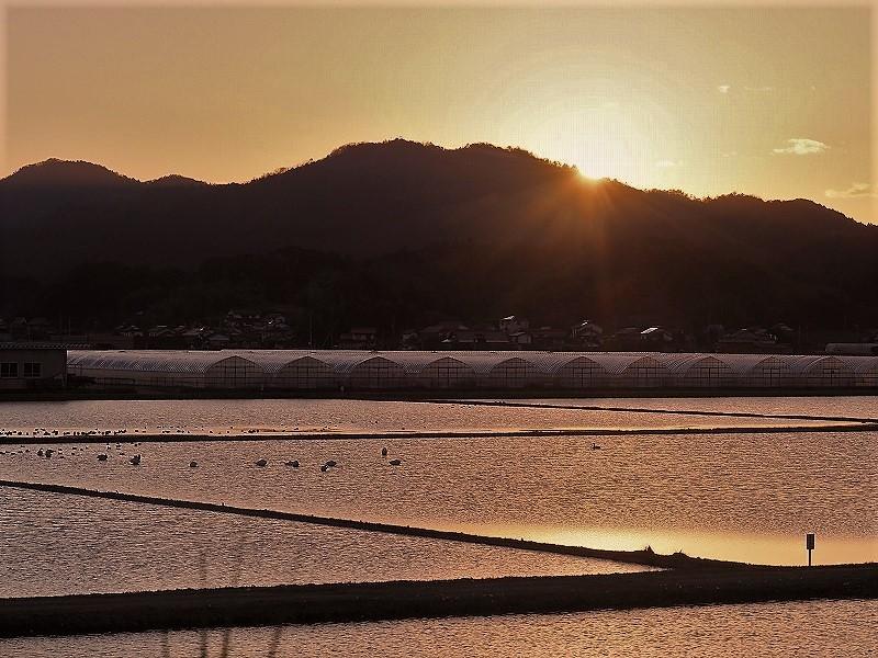 夕陽の白鳥3