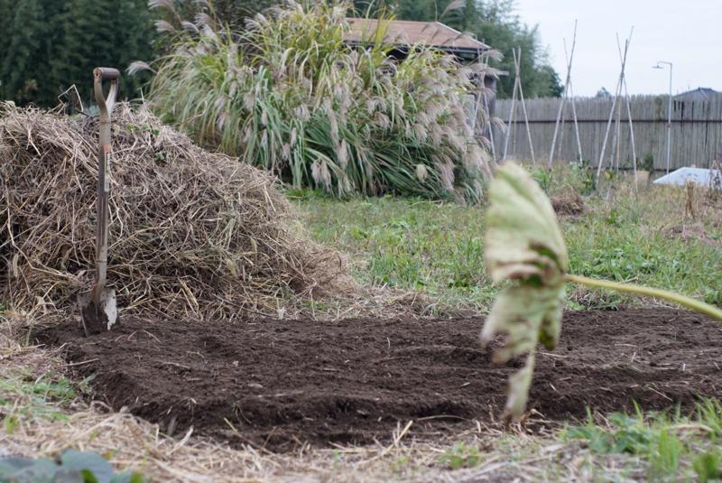 房総フィールドガーデン そら豆の種下ろし 耕起