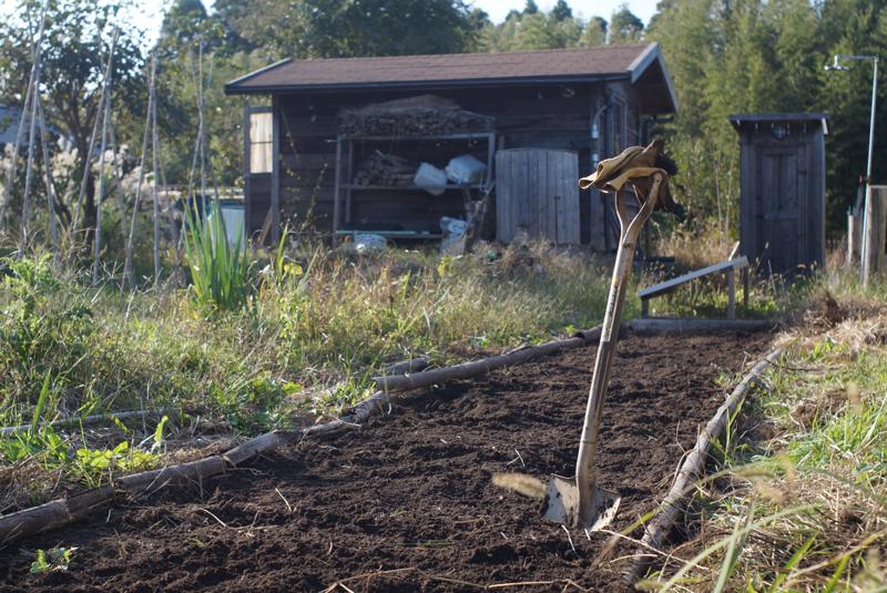 房総フィールドガーデン 小麦の種まき、さつまいも+里芋収穫