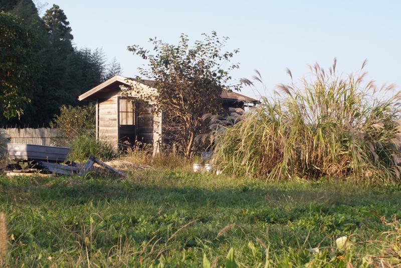 房総フィールドガーデン 小麦の種まき、さつまいも+里芋収穫 夕陽を浴びる小屋