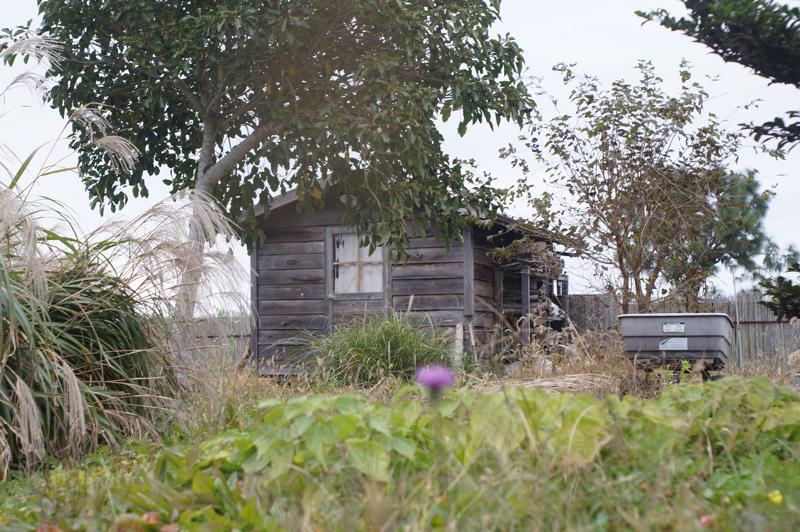 房総フィールドガーデン さつまいもと生姜の収穫