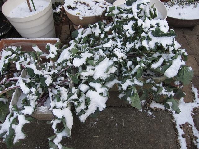 WEB_昨日は雪