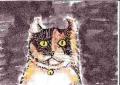 龍猫家のネコ (1)