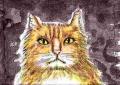 龍猫家のネコ (3)
