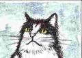龍猫家のネコ (5)
