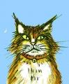 龍猫摩呂猫