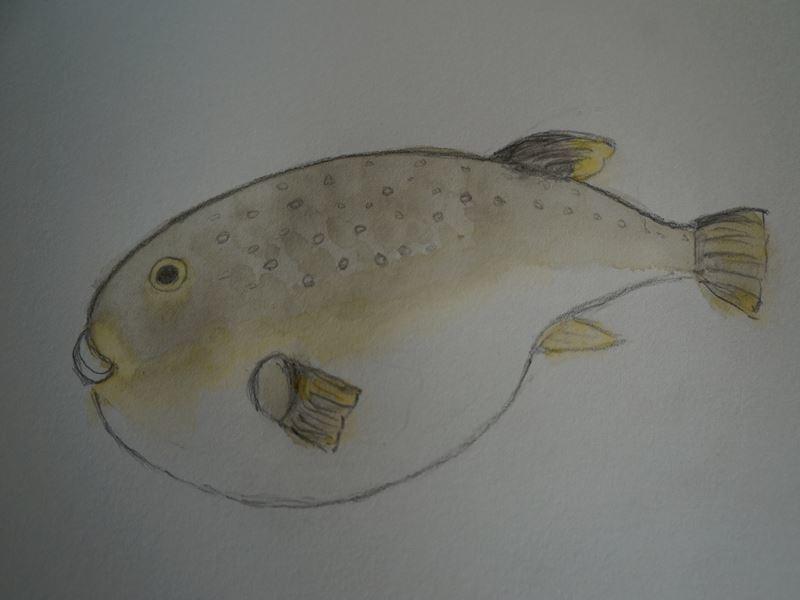 河豚の水彩画