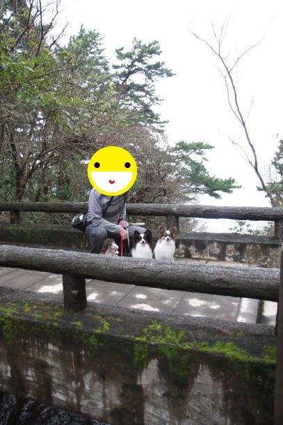伊豆 秋旅行キャノン橋立つり橋00061091