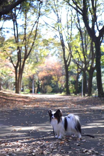 サブ誕生日 昭和記念公園00064387