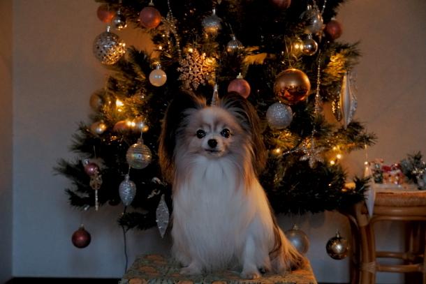 クリスマスツリー ソニー00064563