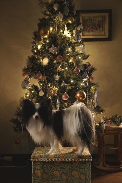 クリスマスツリー ソニー00064569