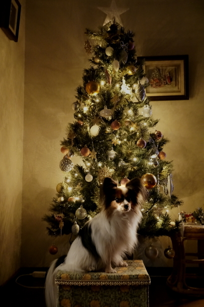 クリスマスツリー ソニー00064573