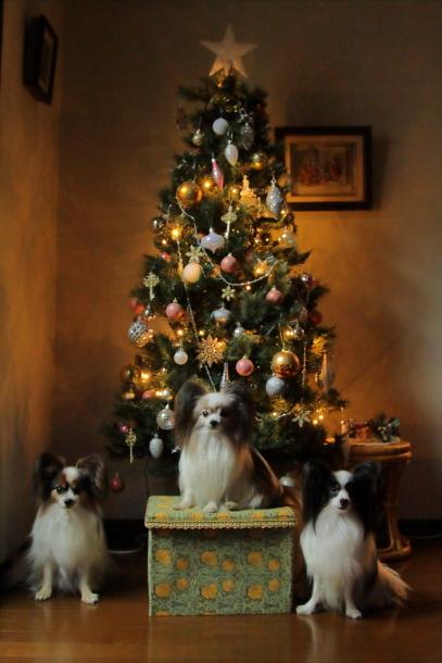 クリスマスツリーキャノン00064600