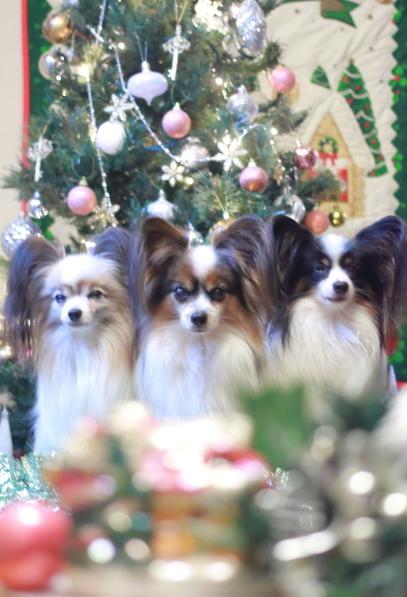 クリスマスツリー500065133