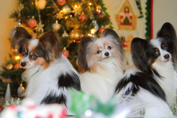 クリスマスツリー500065056