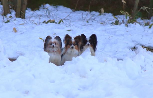 雪のふるさと公園00039473