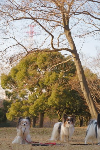 2019初ふるさと公園00068448
