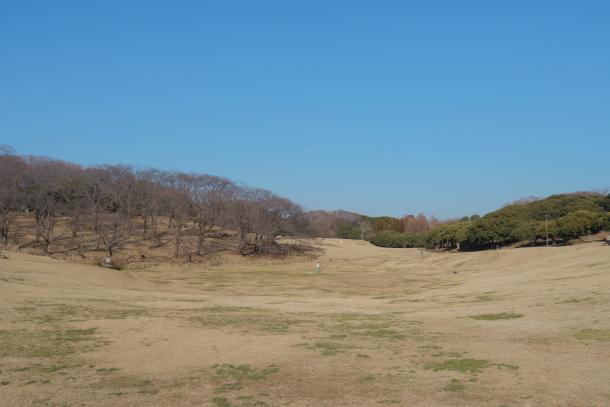 根岸森林公園00068511