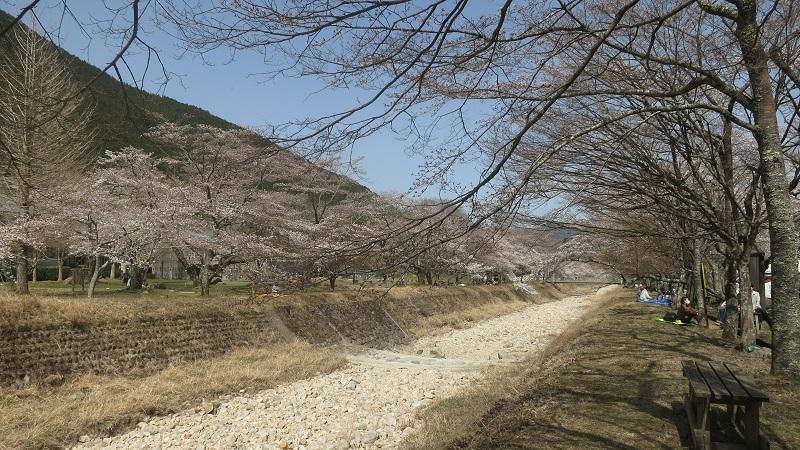 倉町桜の園