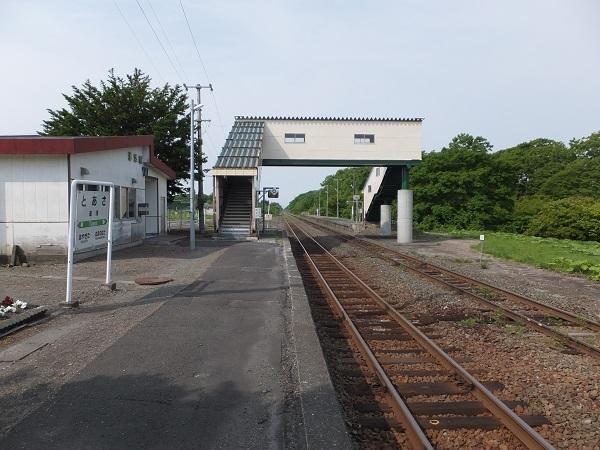 toasa (7)