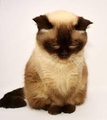 ネコ お辞儀