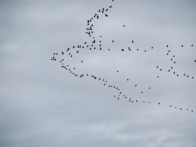 8鳥113