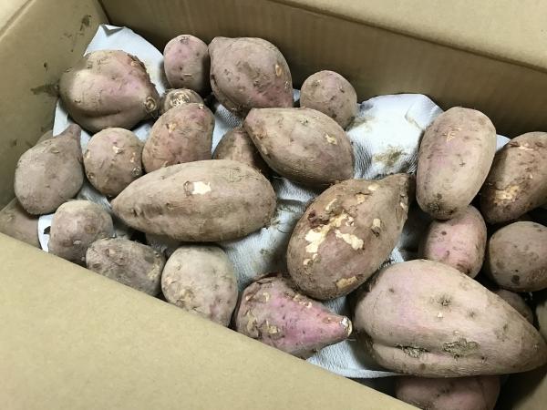 ふるさと納税 鹿児島県中種子町 種子島産 有機JAS安納芋 安納蜜嬉7kg (11)