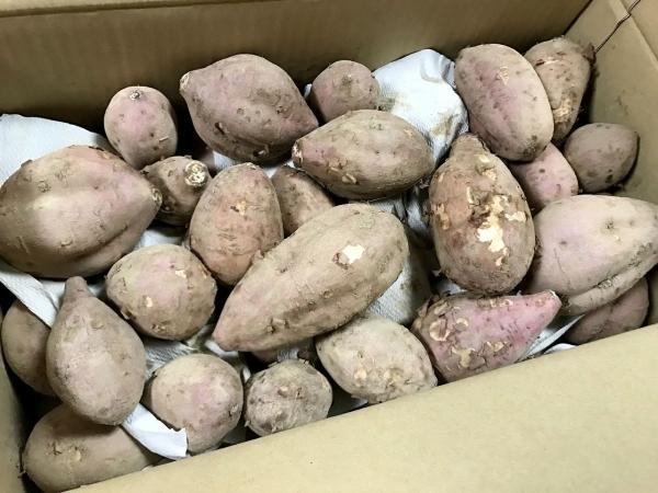 ふるさと納税 鹿児島県中種子町 種子島産 有機JAS安納芋 安納蜜嬉7kg (10)