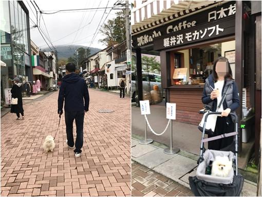 cats_20181030234207e2c.jpg
