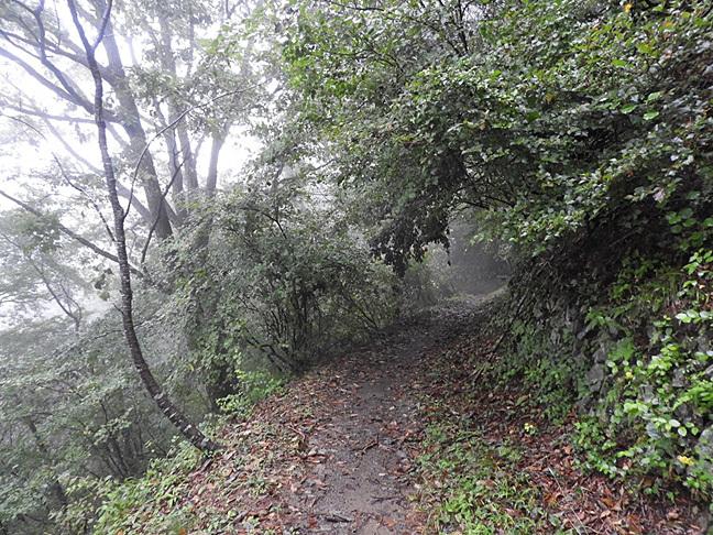 f 登山道