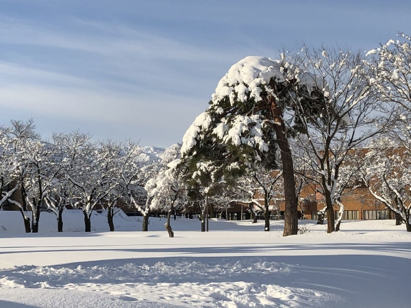 2019-01-10 雪景色