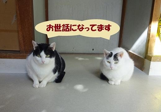 コハク・おつき