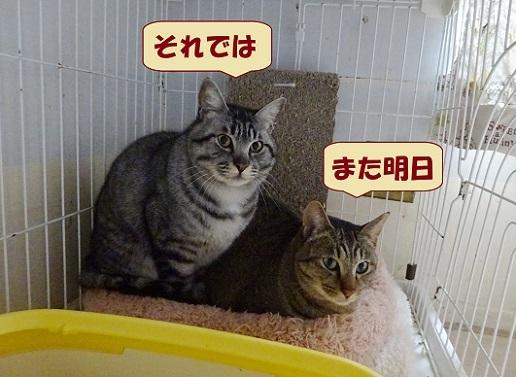 キシュウ・イーグル