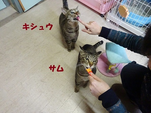 キシュウ4
