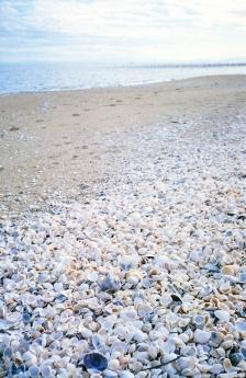 on_the_beach_4.jpg