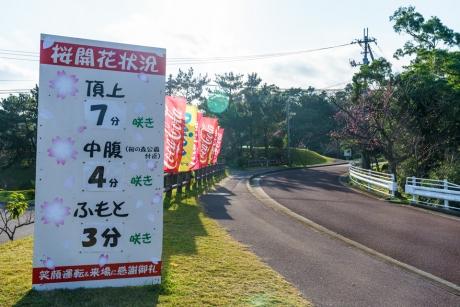 yaedake_sakura_2.jpg