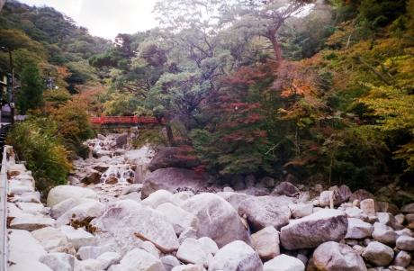 ynoyama_koyo_5.jpg