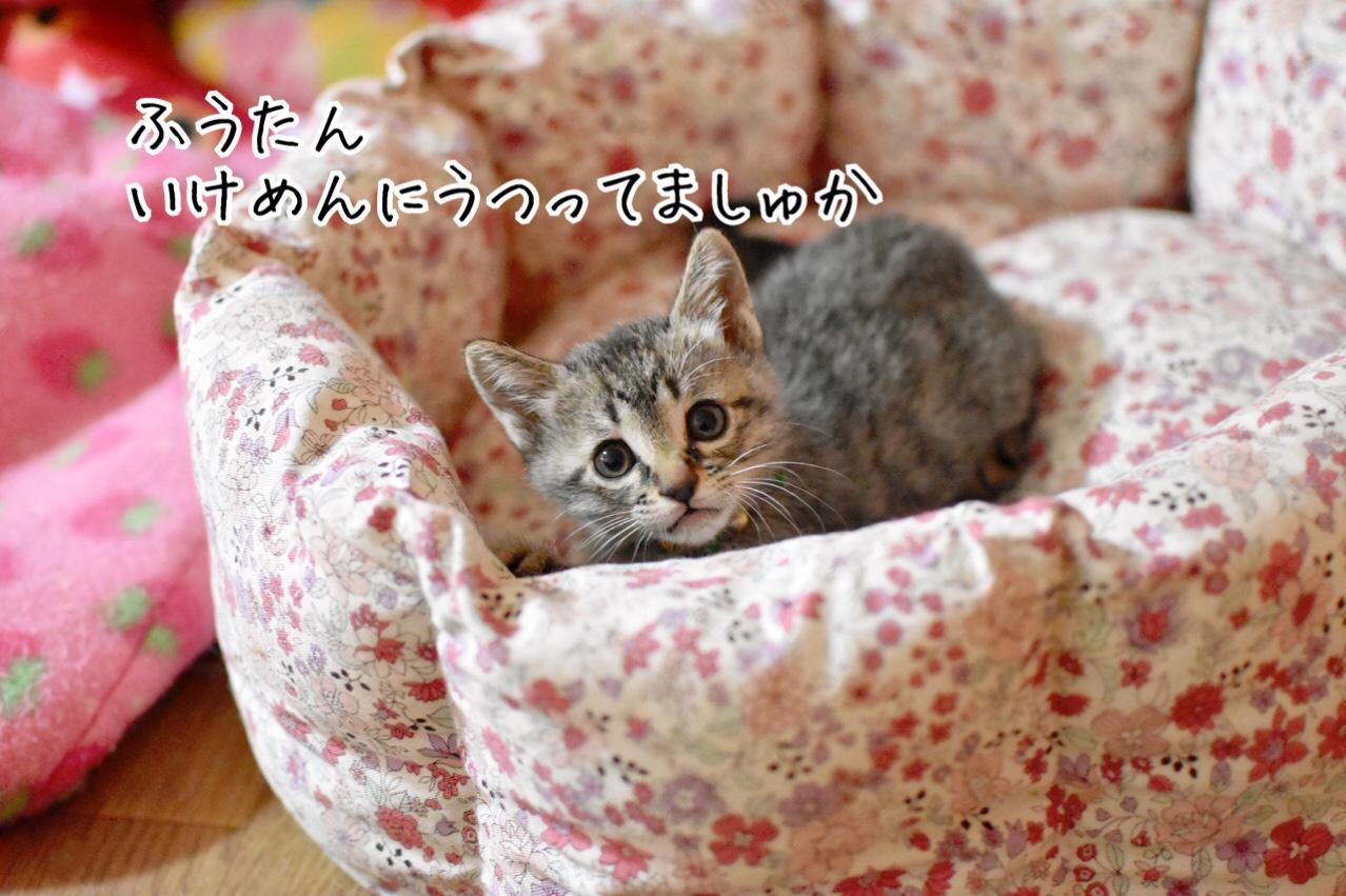 fc2blog_2018112921215404d.jpg